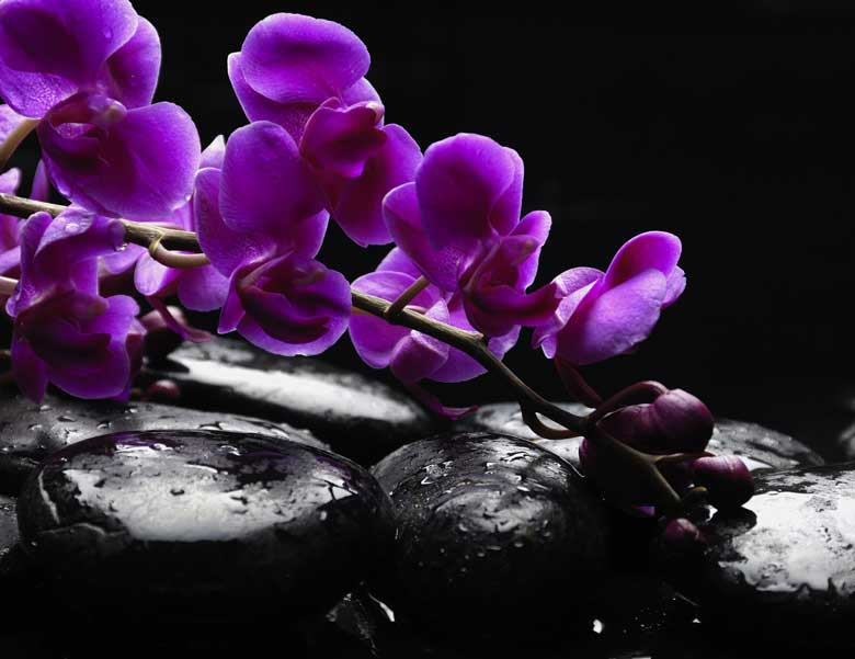 poster fototapete selbstklebend blumen orchidee. Black Bedroom Furniture Sets. Home Design Ideas