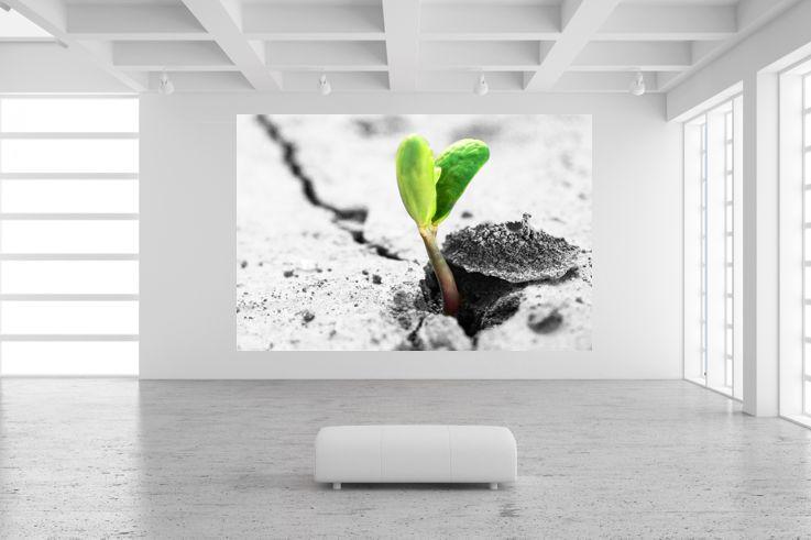 poster fototapete selbstklebend natur vs asphalt ebay. Black Bedroom Furniture Sets. Home Design Ideas